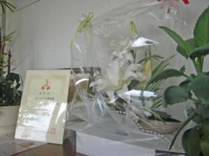 白い花画像